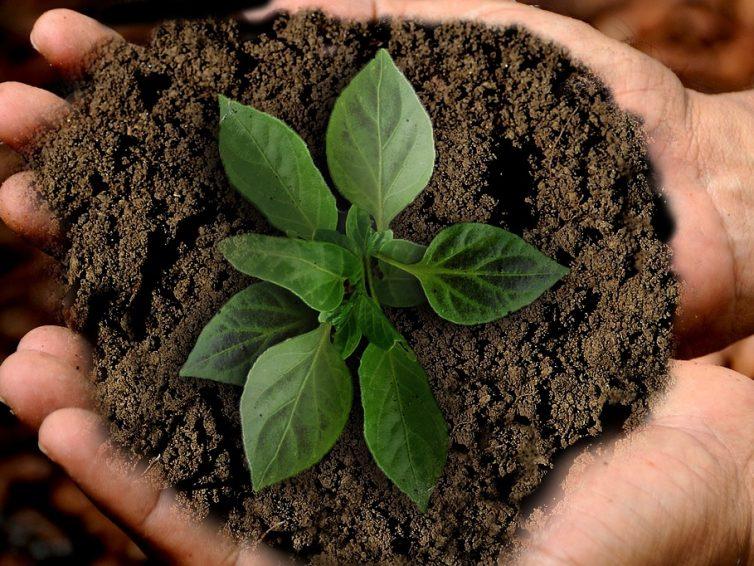 Livreur de terre végétale